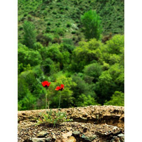 Oshtobin Nature Love BYOPaper!