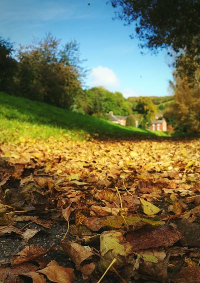 Change of the Seasons ... Autumn Leaf Change Surface Level Focus On Foreground Leaves Newtown Powys Wales Town Fall Falling Leaves осень листья дорожка Otoño Today