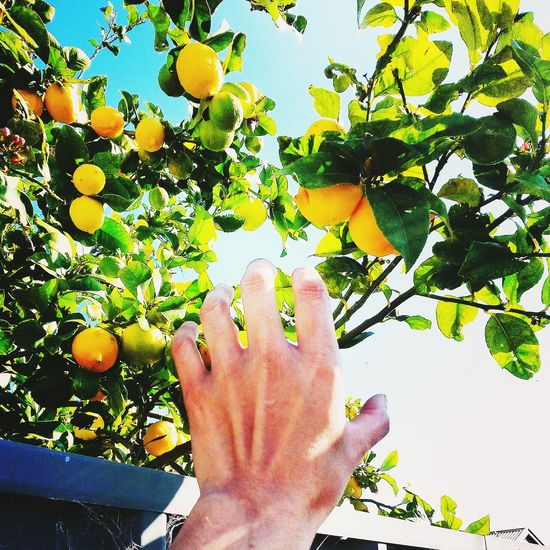 Getting to know my Neighbors one Lemontree at a time ;) Organic Free Neighborhood Thankyou love ♥