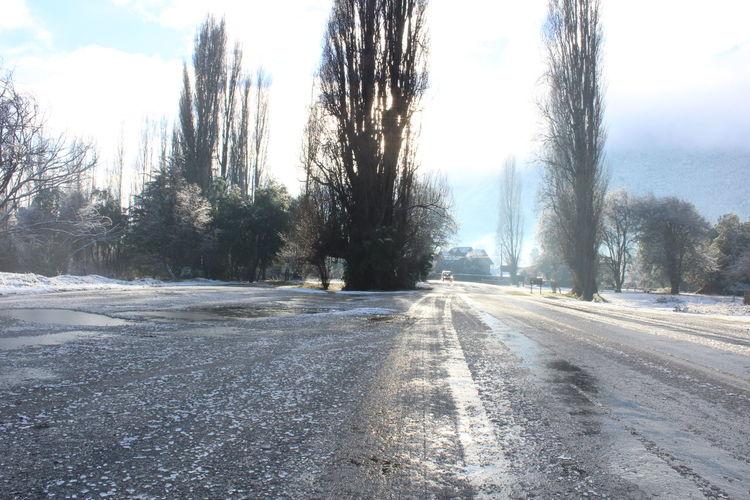 Tree Snow Cold Temperature Winter Road Sky