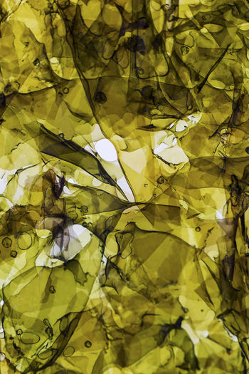 Algenblatt, Leaf, Seaweed Abstract Photography Seaweed Abstract Abstractart Algeria Backgrounds Beauty In Nature Close-up Crumpled Paper Day Flower Food Fragility Freshness Full Frame Leaf Nature No People Outdoors Paper Yellow