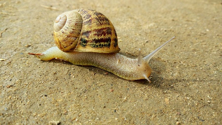 Snail Snail🐌 Animal Wildlife Fragility Mollusc Mollusk Snail Little Snail Shadows & Lights Shades Of Nature