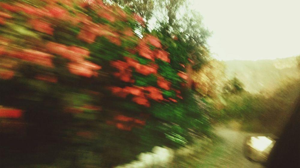 EyeEm Best Shots Open Edit EyeEm Best Edits Distortion Crazyphoto Desenfoque Nature CrazyPhotography