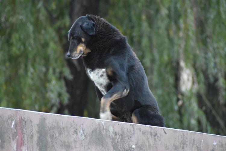 Monkey looking away on railing against trees