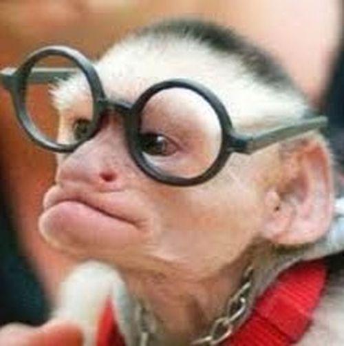 My pet monkey!☺