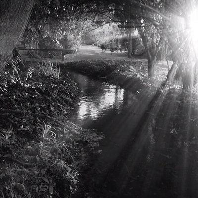 Rare sunshine... #improvedimage #sun #rays #stream #blackandwhite #trees Sun Blackandwhite Trees Rays Stream Improvedimage