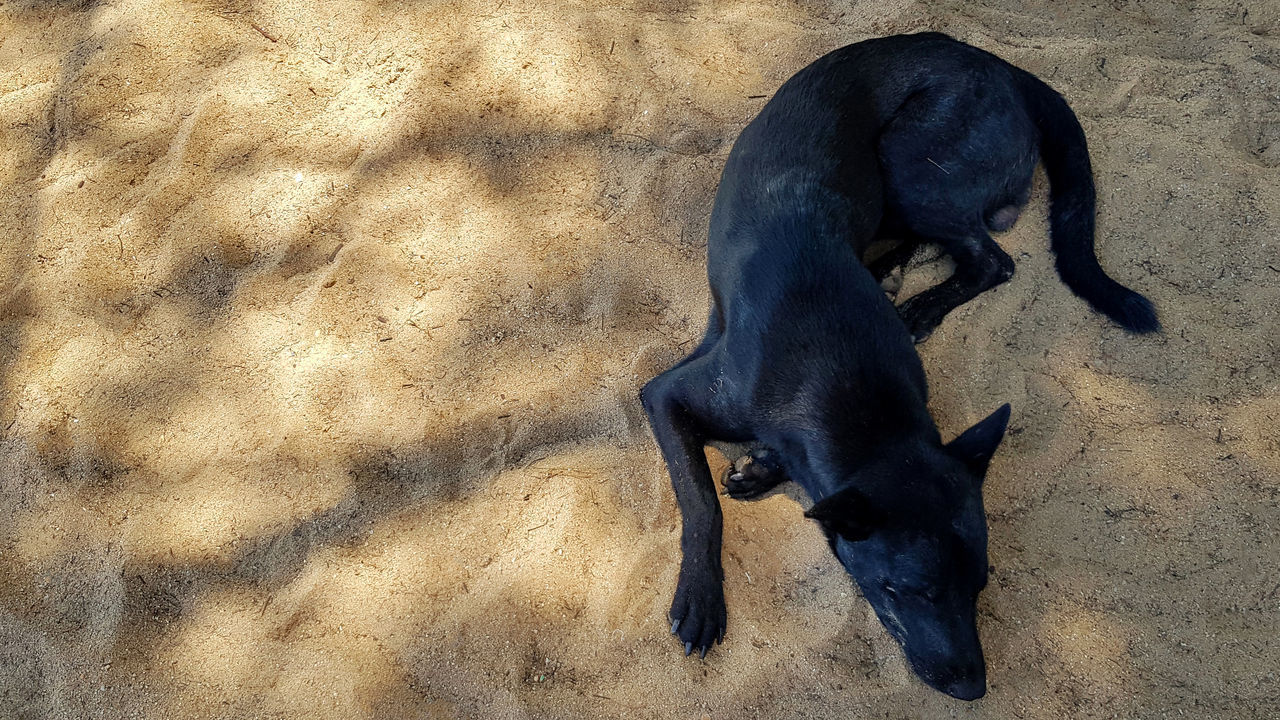 HIGH ANGLE VIEW OF A DOG ON THE FLOOR