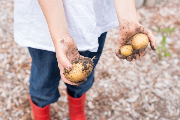 Low section of messy woman holding potatoes while standing on field