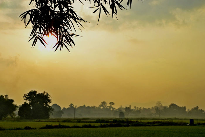 EyeEmNewHere Beauty In Nature Environment Field Growth Land Landscape No People Plant Scenics - Nature Sky Tranquil Scene Tranquility Tree