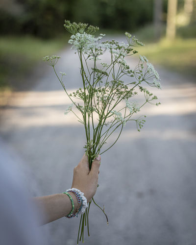 Cropped hand of woman holding flowers on road