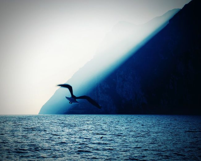 ... and freedom for all Sunlight Light And Shadow Light Humpback Whale Bird Water Full Length Silhouette Sea Foggy 17.62°