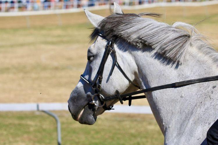 EyeEm Selects Mammal Horse Animal Themes Animal One Animal Livestock Domestic Animals Animal Body Part