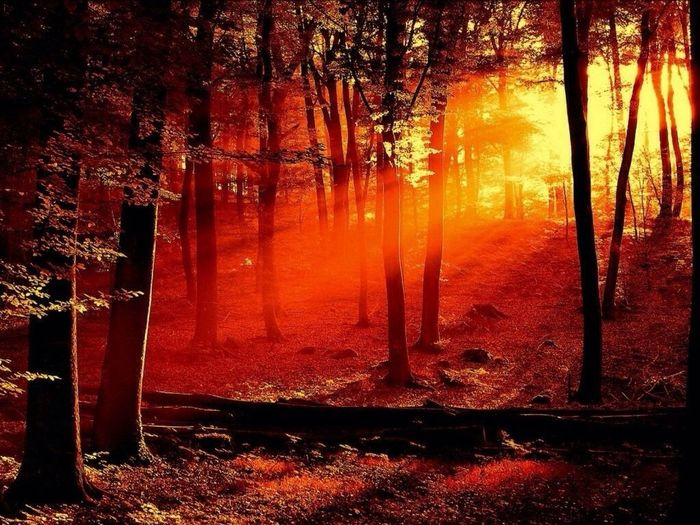 Night Lights Forest Red Lights Nightphotography Ghosts Ghost In The Forest