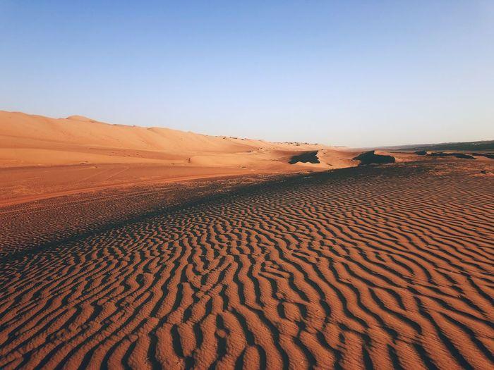 Landscape Sandy