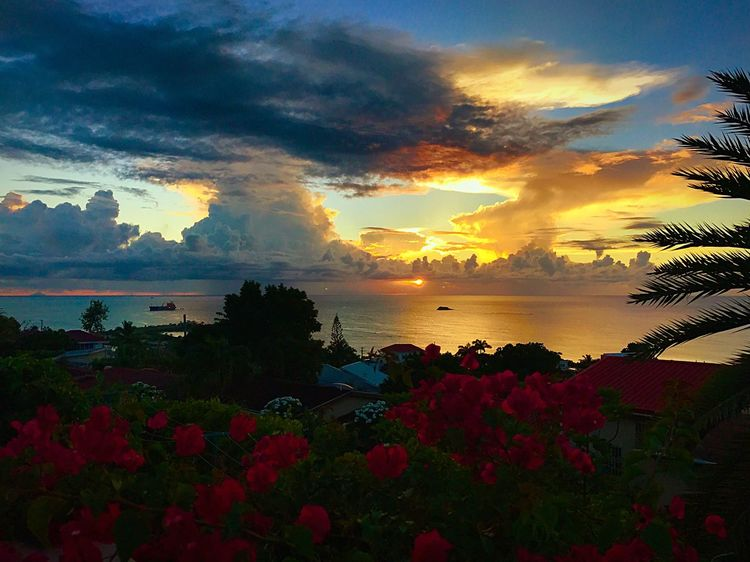 JeanneRotaMatthews Sunset Beauty In Nature Nature Sky Cloud - Sky Sea Scenics Flower Tranquility Water Tranquil Scene EyeEmCaribbean Eyeembeachlover No People Outdoors Idyllic Tree Silhouette Horizon Over Water Plant Beach Growth