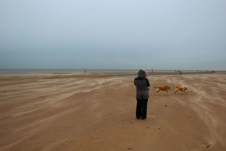 Woman and dogs on the beach against sky