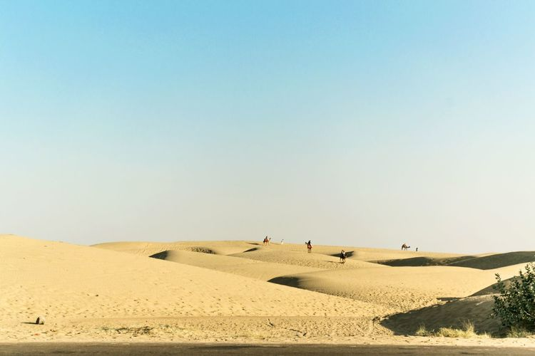 Arid Climate Beach Beauty In Nature Camel Clear Sky Clear Sky Day Desert Landscape Light And Shadow Nature No People Outdoors Patterns Patterns In Nature Sand Sand Dune Sky Sunny Day Thar Traveling