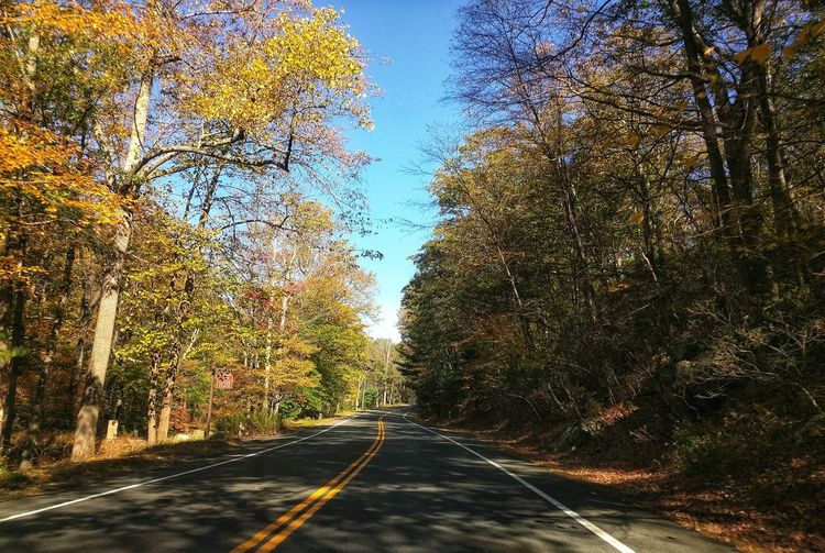 The Way Forward Road No People Transportation Outdoors Day Nature Tree Sky Clear Sky Autumn Leafs Autumn Colors Tranquility Fall Leaves On Branches, Fall Season Nature Photography Traveling Fall Collection Fall Foliage Nature Road Trip Photograpghy Season Travel Photography Fall Colors