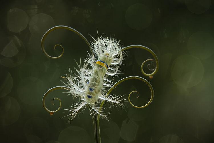 Close up of beautiful caterpillar