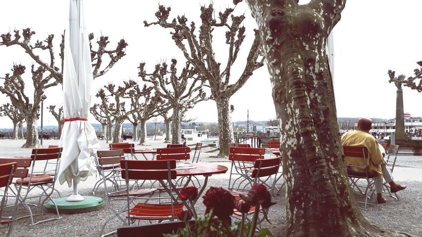 Blick zum Säntis Tree Tree Trunk Table Chair Place Setting Cafe City Sky