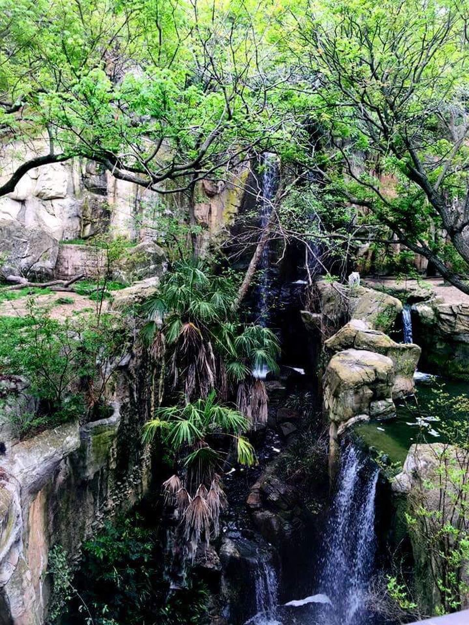 waterfall, tree, beauty in nature, nature, scenics, flowing water, forest, rock - object, tranquil scene, tranquility, water, idyllic, rock formation, no people, outdoors, day, growth, green color, non-urban scene, river, moss, lush foliage, travel destinations, motion, landscape, plant, branch, sky