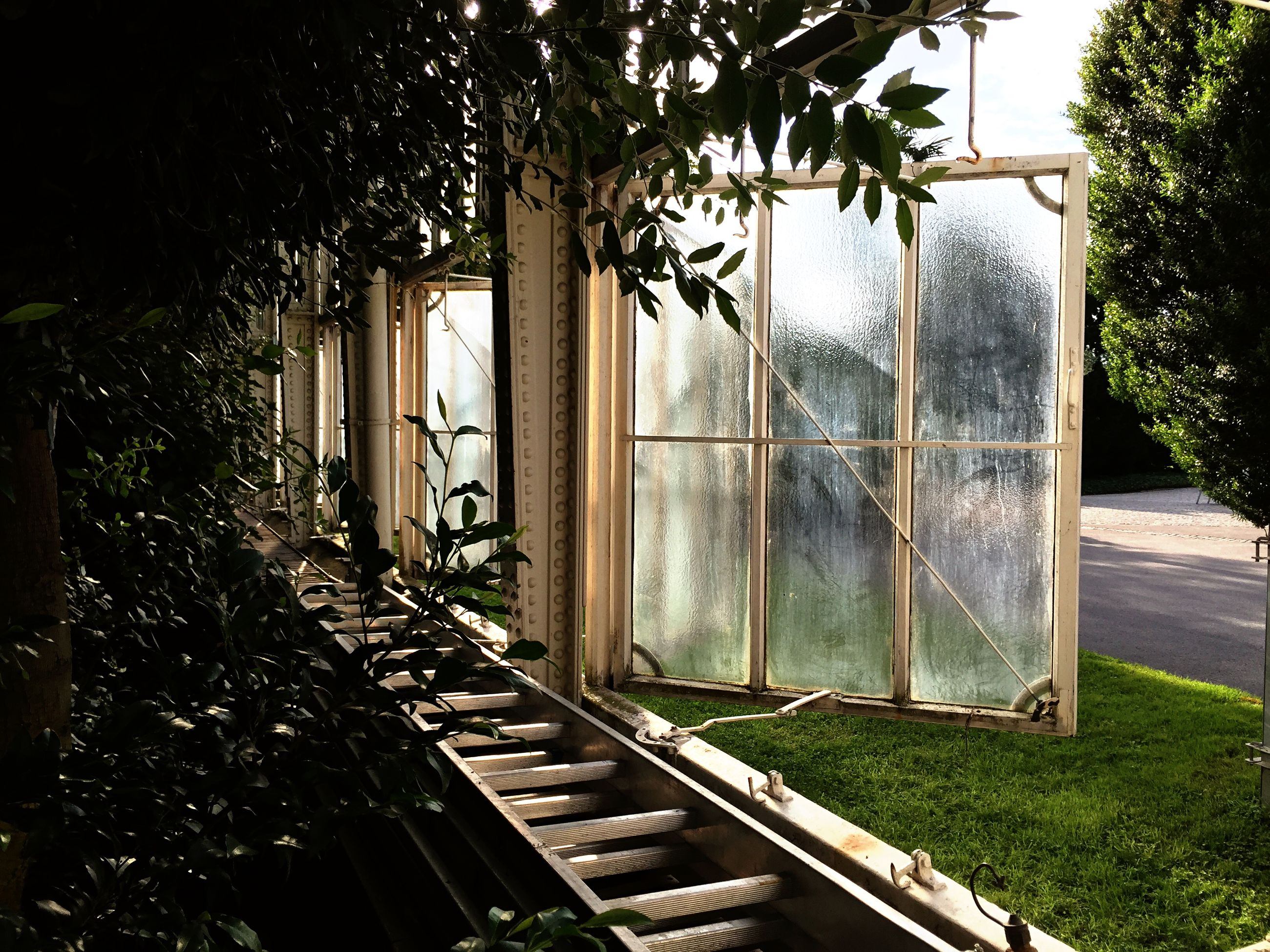 window, building exterior, tree, architecture, built structure, glass - material, house, grass, growth, closed, transparent, plant, day, no people, green color, door, metal, fence, outdoors, sunlight