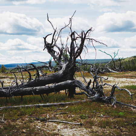 Dead Tree in the Yellowstone National Park Wyoming EyeEm Best Shots EyeEm Nature Lover EyeEm Selects EyeEm Gallery EyeEmNewHere Yellowstone Yellowstone Ecosystem Yellowstone National Park Yellowstone Wildlife Arid Climate Bare Tree Beauty In Nature Cloud - Sky Day Dead Plant Dead Tree Eye4photography  Landscape Nature No People Outdoors Tranquil Scene Tranquility Tree Tree Trunk