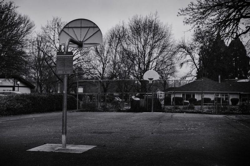 Basketball - Sport Tree Basketball Hoop Court Bare Tree Sport Sky Built Structure