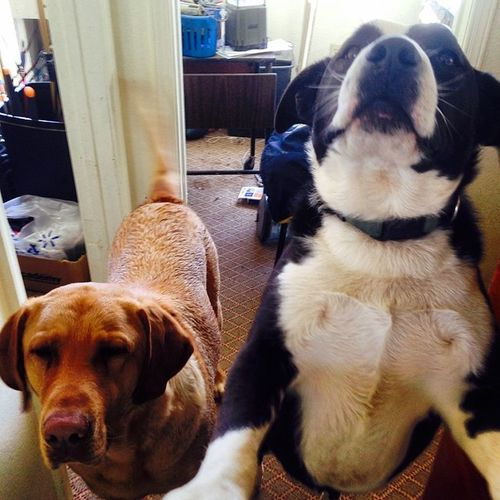 """May I help you?"" -Clifford & Duke"