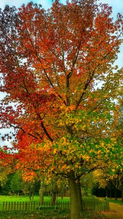 Autumn Outdoors Beauty In Nature Tree Many Colorz Of Nature