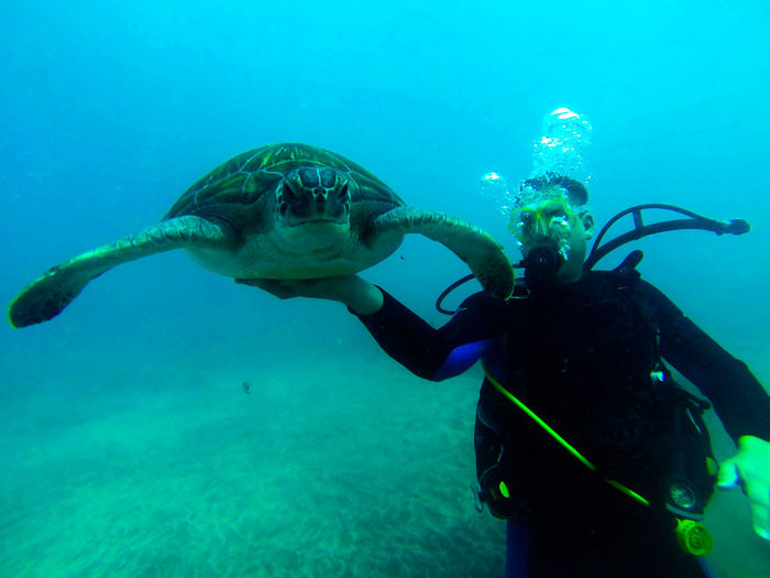Man holding turtle while scuba diving in sea