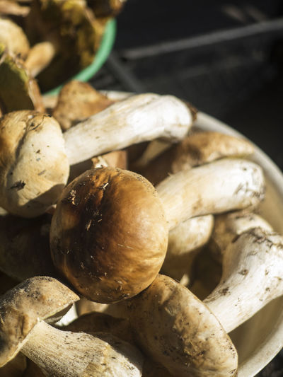Boletus edulis (English: penny bun, cep, porcino or porcini) in the basket Boletus Edulis CEP Mushrooms Porcini Acorn Close-up Day Food Food And Drink Freshness Fruit Healthy Eating Nature No People Nut - Food Nutshell Outdoors Penny Bun Porcino