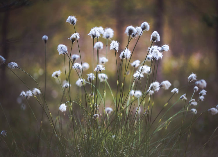 Beauty In Nature Close-up Day Flora Flower Fragility Freshness Grass Growth Nature No People Outdoors Plant