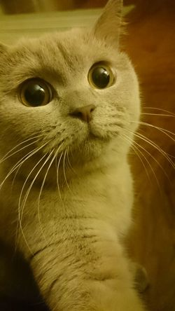 Selfie master Cats Of EyeEm Fluffy Selfies It Wasn't Me Big Eyes Cutest Thing Ever! Cutest Cats Animals