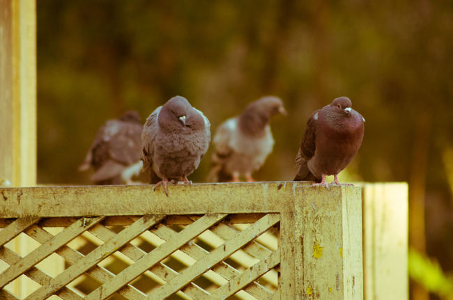 Animal Themes Animal Wildlife Animals In The Wild Bird Crise Day Doves Focus On Foreground Melancholy Mourning Dove Nature No People Outdoors Perching Sedness Thinking About Life Togetherness EyEmNewHere EyeEmNewHere The Great Outdoors - 2017 EyeEm Awards BYOPaper! EyeEm Selects Pet Portraits