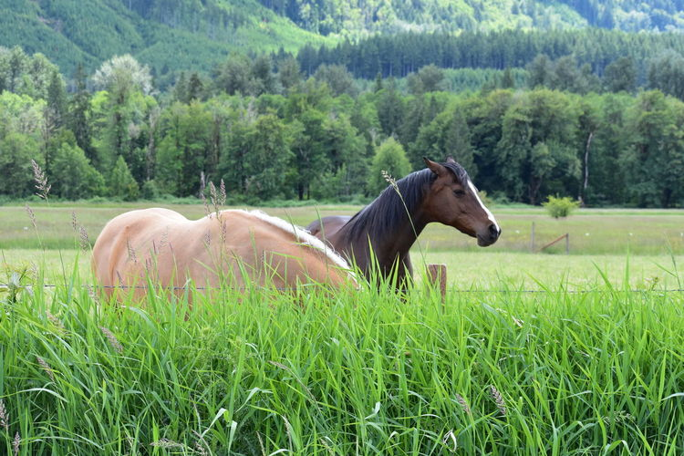 horses in the