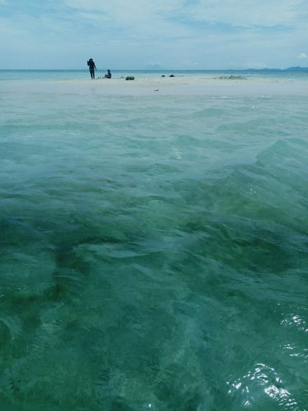 Sea Animal Themes Beach Water Nature Beauty In Nature Day Tranquility Outdoors Scenics Sky Horizon Over Water Sea Life INDONESIA Lampung