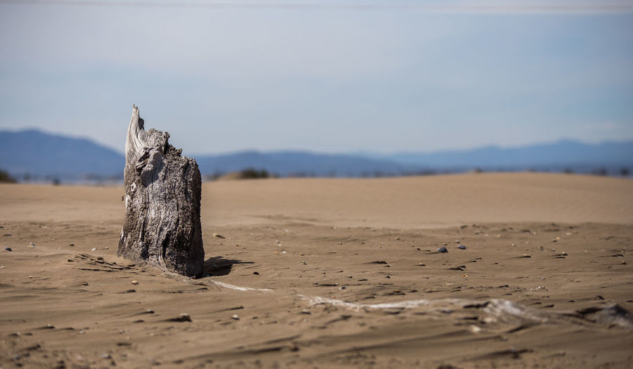 Wood Beach Nature Sky Landscape Colors Tree Lighthouse Outdoors Tranquility Sand Skyporn Land Tree Trunk No People Landscape_Collection Sand Dune Tranquil Scene Wood - Material Scenics - Nature Desert Environment Beauty In Nature Day Arid Climate Selective Focus Mountain Non-urban Scene Climate Driftwood