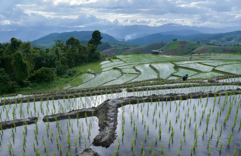 Agriculture Beauty In Nature Cloud - Sky Cultivated Land Farm Field Growth Landscape Mountain Mountain Range Nature No People Rice - Cereal Plant Rice Paddy Rural Scene Scenics Sky Tranquil Scene Tranquility Tree Water