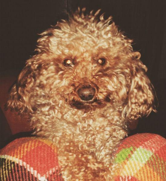 Mi amor🐾❤❤❤ BuonaDomenica  Piove Coperte Film Noi My Puppy Dog Animals EyeEm Best Shots Cute Pets