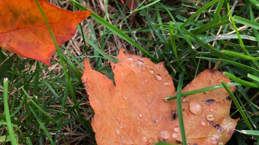 Leaf Orange Color Nature High Angle View Outdoors Day Grass Growth No People Fragility Close-up Beauty In Nature Autumn Freshness