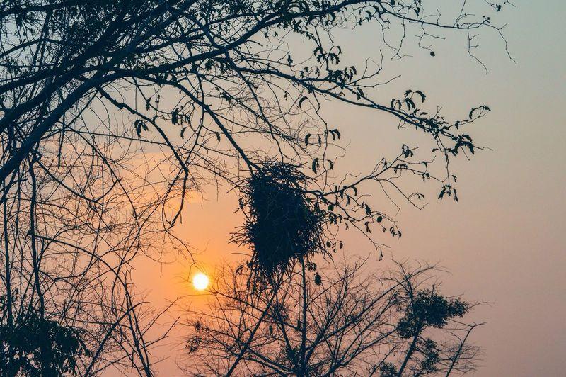 Bird nest on