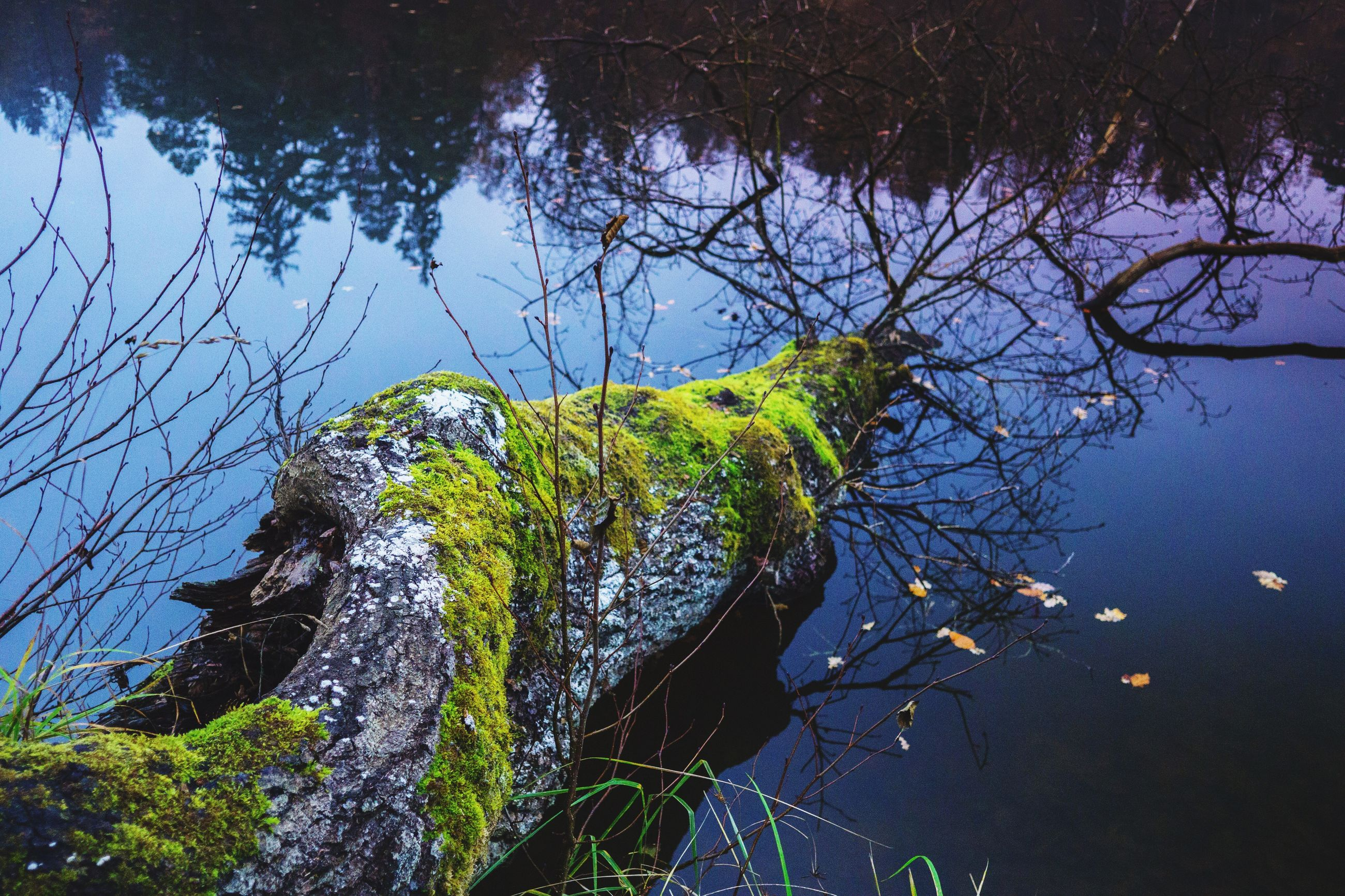 tree, nature, no people, branch, sky, low angle view, growth, water, beauty in nature, outdoors, day, animals in the wild, animal themes