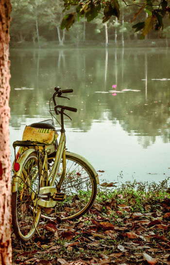 Bicycle Cycling Land Vehicle Mode Of Transport Outdoors Parked Peace And Quiet Peaceful Peaceful View Reflection Robyn Haworth Stationary On Your Bike Tropical Climate Celebrate Your Ride The Great Outdoors - 2017 EyeEm Awards Let's Go. Together. Connected By Travel