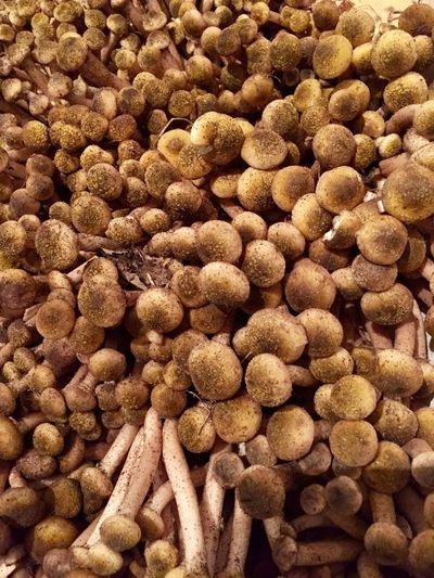 Chiodini mushrooms Food Mushroom Mushrooms 🍄🍄 Organic Nature Autumn Chiodino Wood Vegetable