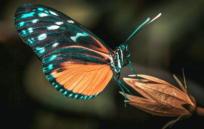 linda borboleta #Flores #lightroom #motog3 #luzdesol #borboletas #diadesol #Nature  #photography #firstpicture