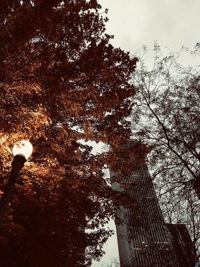 🍁 Tree Plant