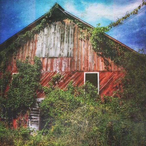 Built Structure Building Exterior No People Architecture Abandoned Ivy Beauty Of Decay Barn Red Barn Red Barn Love Decay And Dereliction Rural Landscape