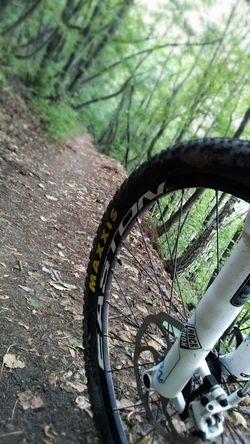 MTB Trail Trail Ride Forest