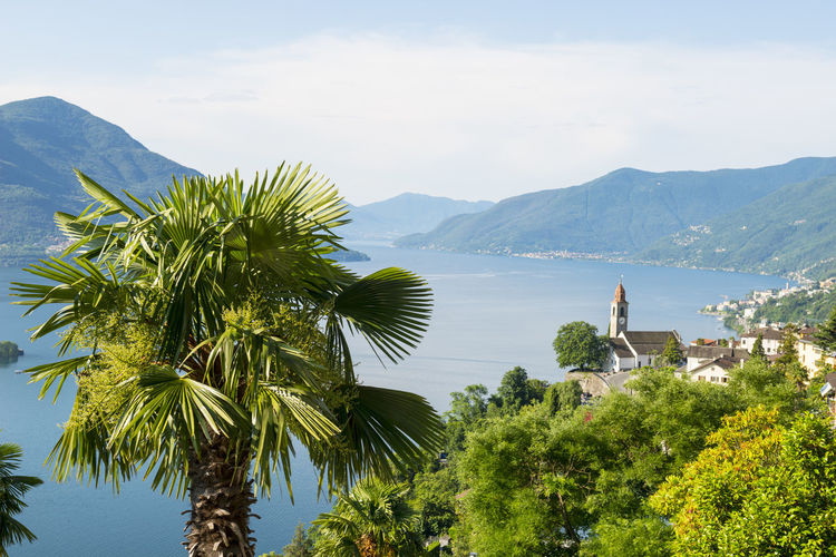 palm tree and a church in the village Ronco sopra Ascona with mountain and alpine lake Maggiore in Ticino, Switzerland. Alpine Lake Beauty In Nature Building Exterior Church Colorful Day Elevated View Idyllic Lago Maggiore Lake Landscape Mountain Mountain Range Nature No People Outdoors Palm Tree Panoramic View Power In Nature Scenics Sunny Swiss Alps Tranquility Travel Destinations Village